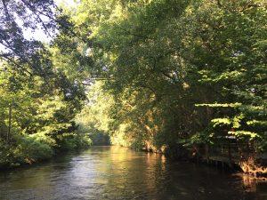 Alsterkanal: Mitten in der Stadt umgeben von Grün